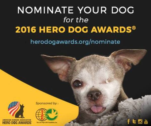 2016 aha hero dog awards