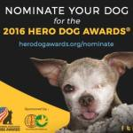 Nominate Your Own 'Superdog' for a Hero Dog Award