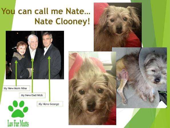 george clooney adopts unwanted dog for parents