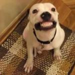 This Dog Who Can 'Say Cheese' on Command Won't Be Homeless for Long