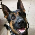 Ohio K9 Officer Jethro Dies After Grocery Store Shootout