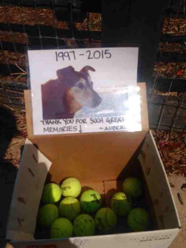 tennis balls left at dog park in memory of dog