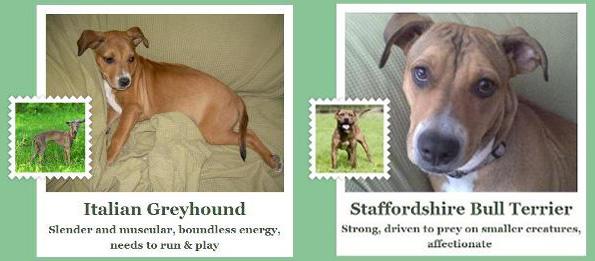fetch app identifies dog breeds