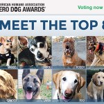 Vote Now for the 2016 AHA Hero Dog Award Winner