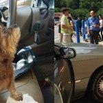 Dog Drivers Crash into Walmart Store (They're OK)