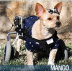 Mango 2016 Hero Dog Awards finalist