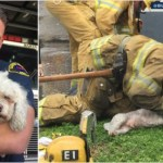 Hero Firefighter Brings Dead Dog Back to Life