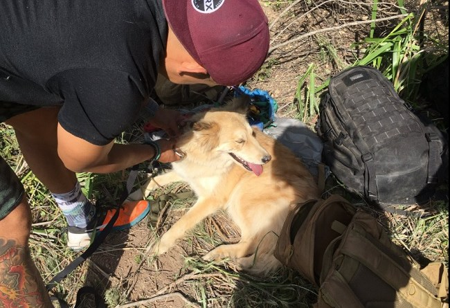 Dog survives fall into 30-foot well