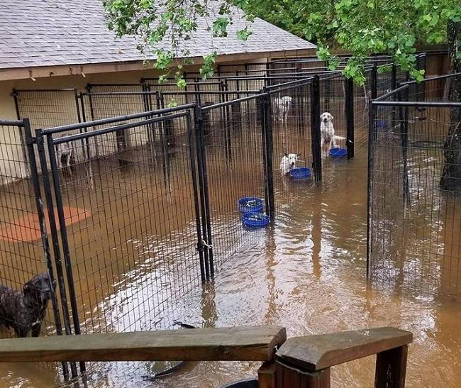 Hurricane Harvey in Texas floods kennels