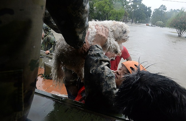 hurricanes dog rescue