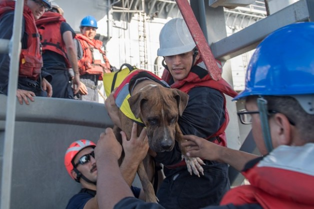 Navy rescues women and dogs lost at sea