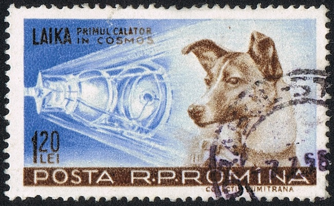 Laika first dog in space