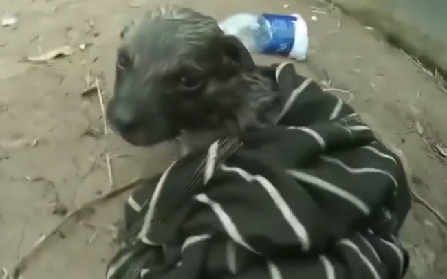 nearly drowned puppy revived using water bottle
