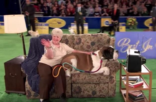 2018 America Rescue Dog Show