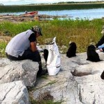 How the Heck Did 7 Puppies End Up on an Uninhabited Canadian Island?