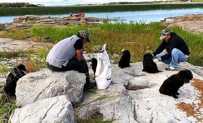 puppies found on uninhabited island