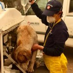 How to Help Pets Displaced by Wildfires Burning in California