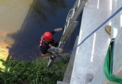 firefighters rescue blind and deaf dog swept downstream