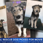 Former Shelter Dog Stars in Live-Action 'Lady and the Tramp'