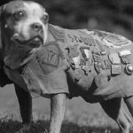 5 Working Dogs Who Became Heroes