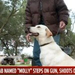 Yellow Lab Puppy Shoots Woman (She's Okay)