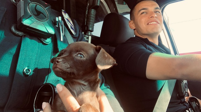 LAPD adopts abandoned Pit Bull puppy