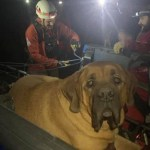 Volunteer Rescuers Carry Exhausted 190-Pound Mastiff Down Mountain Trail