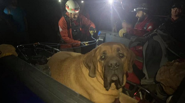 mastiff rescued from mountain trail
