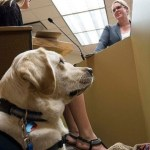 Why Dogs Are Getting a Bigger Role in Courtrooms