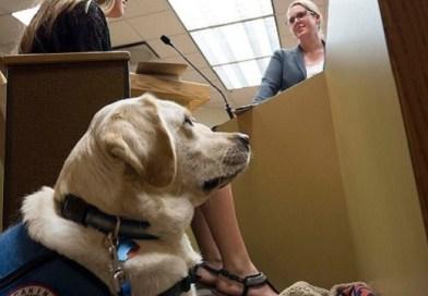 courthouse facility dog