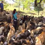 Doggie Paradise: Hundreds of Strays Make Territorio de Zaguates Their Home