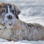 How to Help Texas Animal Rescues and Shelters Affected by Freezing Weather