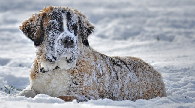 Texas animal shelters and rescues impacted by freezing weather