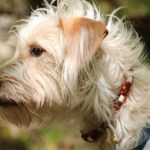 Nearly 1,700 Pets Have Reportedly Died After Wearing Seresto Flea and Tick Collars