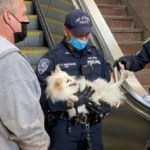 Yet Another Scary Reason Not to Take Your Dog on an Escalator