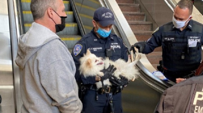 dog rescued after his paw got stuck in a New Jersey PATH station escalator