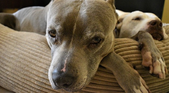 insurance companies blacklist pit bulls and other breeds