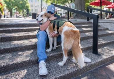 PAWS Act Becomes Law Not a Moment Too Soon