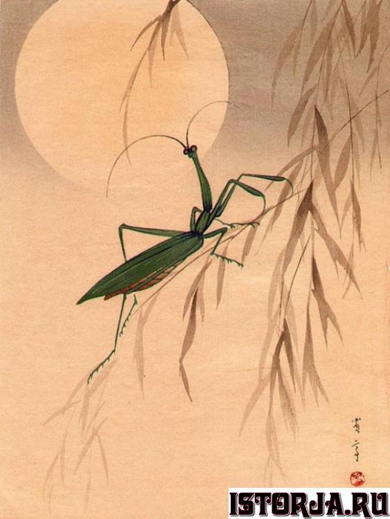 Картинки по запросу Ватанабэ Сейтей