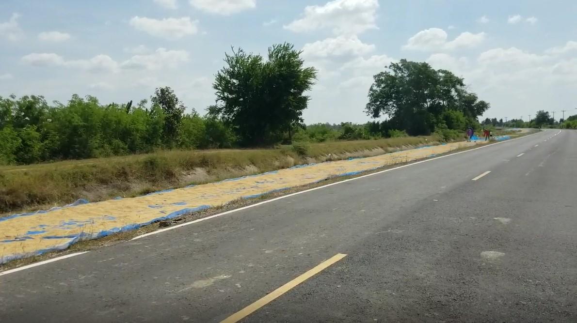 rice road 01