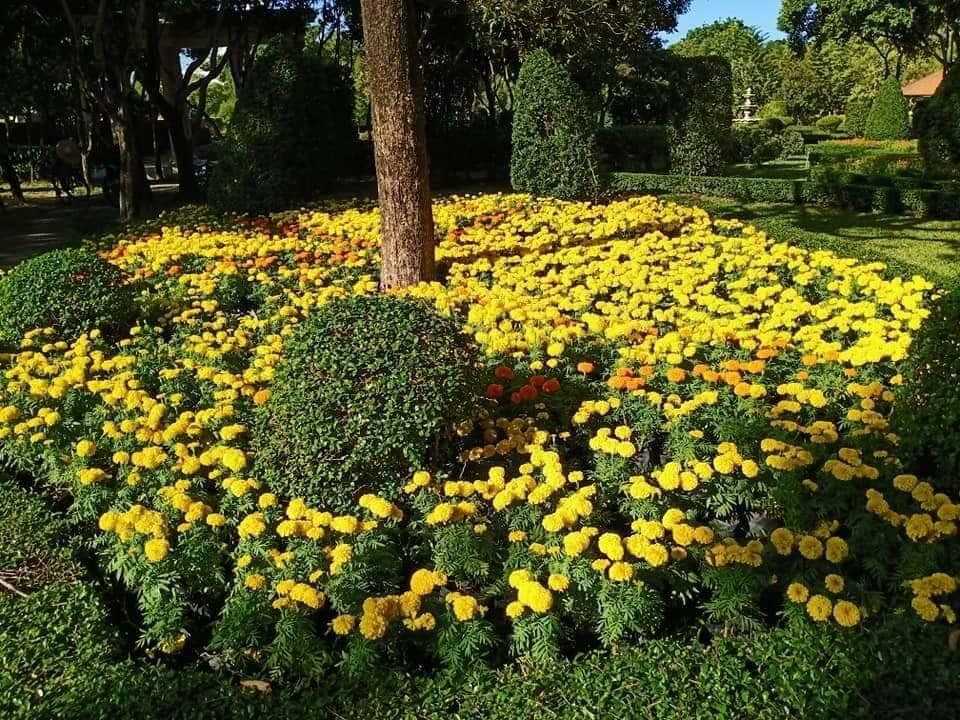garden rama9 08