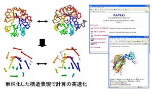 研究紹介:蛋白質機能予測學講座