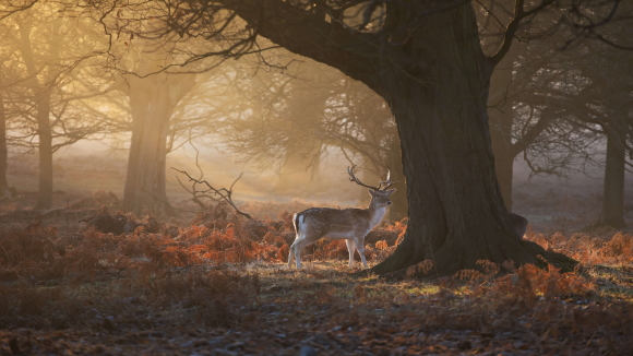 Antlers in Autumn
