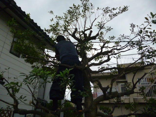 アイティーエコロジーサービス 庭木剪定