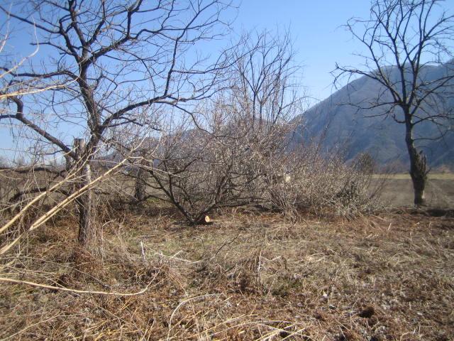 木を伐採・抜根して整地してください 群馬 沼田