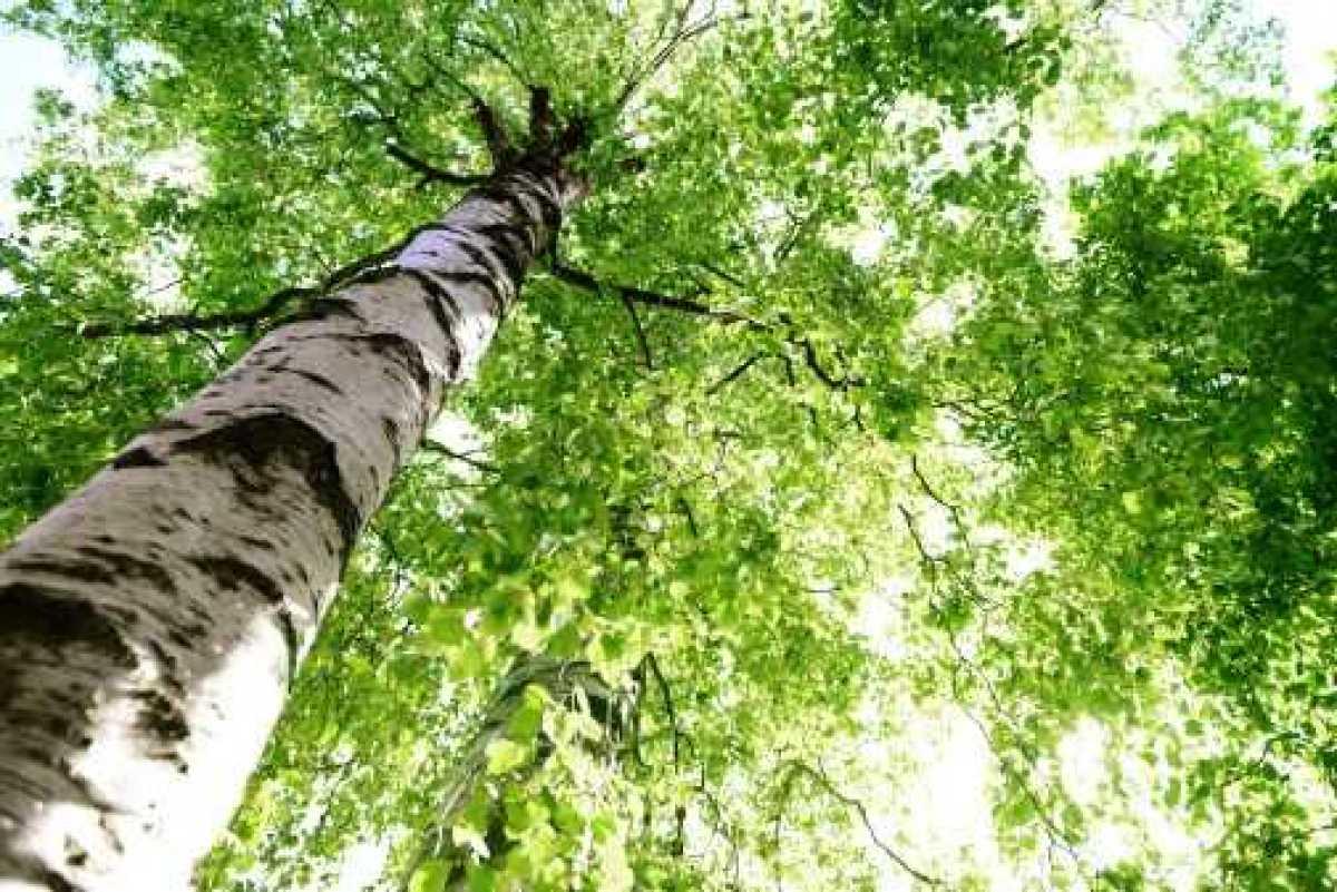 Startups och innovationer viktiga för att Umeå ska bli klimatneutralt 2030 1