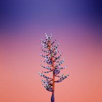 iOS_11_GM_Wallpaper_Flower_AECHMEA-740×740