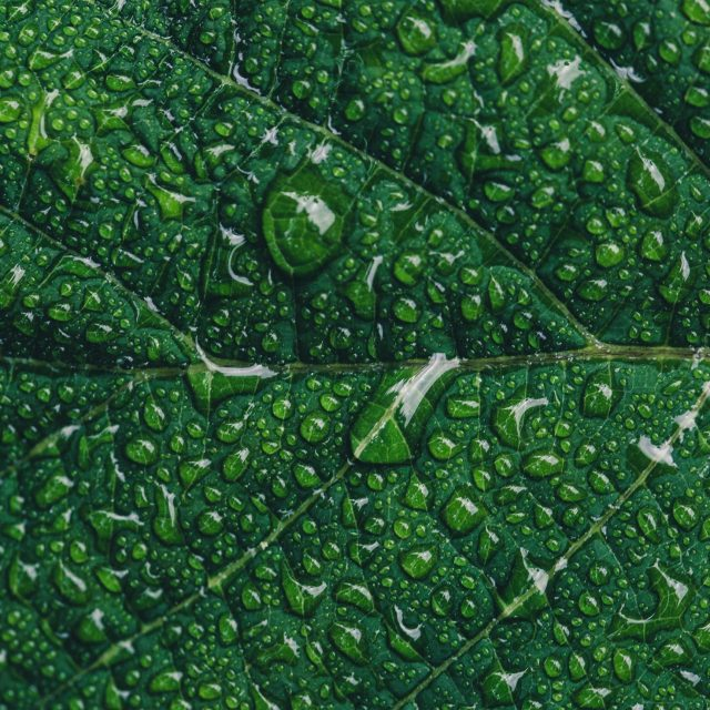 green-leaf-rain-nature-tree-ipad-pro-1472×1472