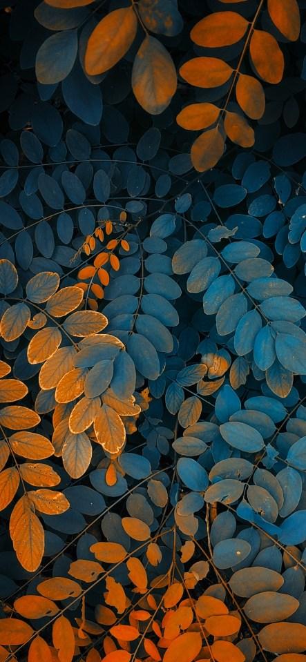 Nature-photography-iPhone-wallpaper-wallsbyjfl-orange-green-fern
