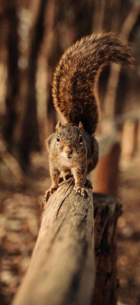 squirrel-walking-on-fence-5k-eo-1125×2436-473×1024